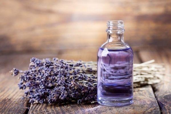 Cây oải hương liệu pháp tự nhiên phục hồi da mặt hư tổn